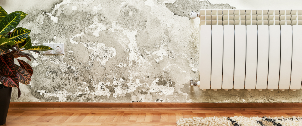 A wall inside of a home that has mold growth and is in need of methods to prevent mold growth from spreading.